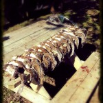 Just one of the successful squirrel hunt mornings around the Bullock Camp.